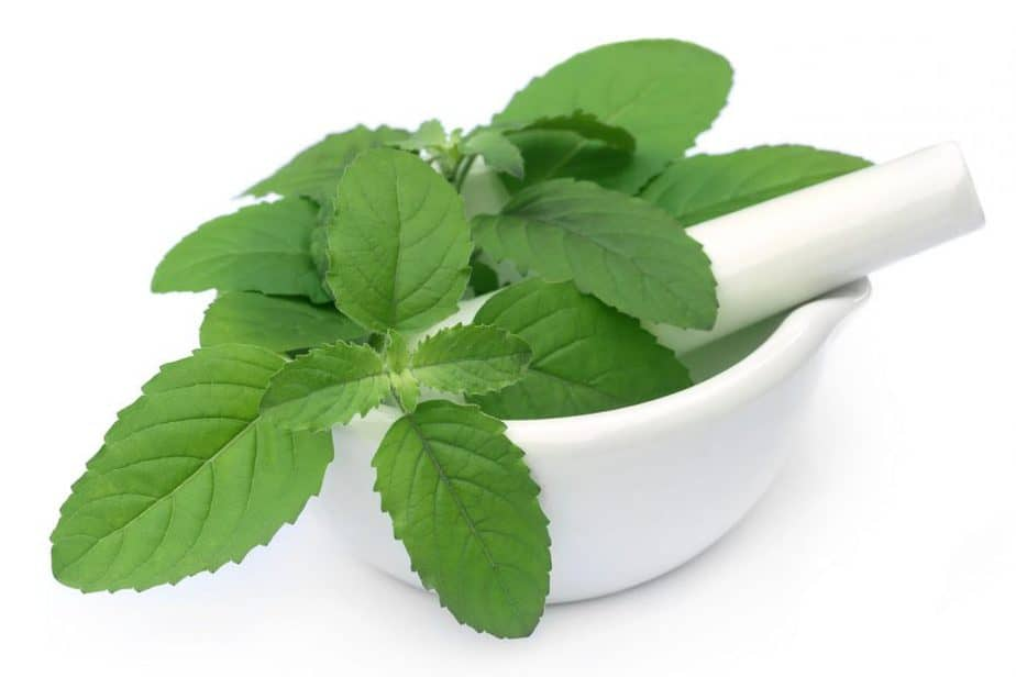 291712 medicinal plants and their benefits