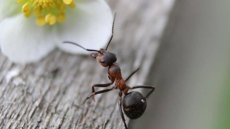 النمل من المنزل