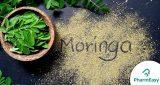 أوراق المورينجا - 16 فائدة صحية يجب أن تعرفها