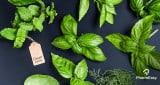 تعرف على أفضل 20 من الخضروات الورقية يجب أن تأكلها!