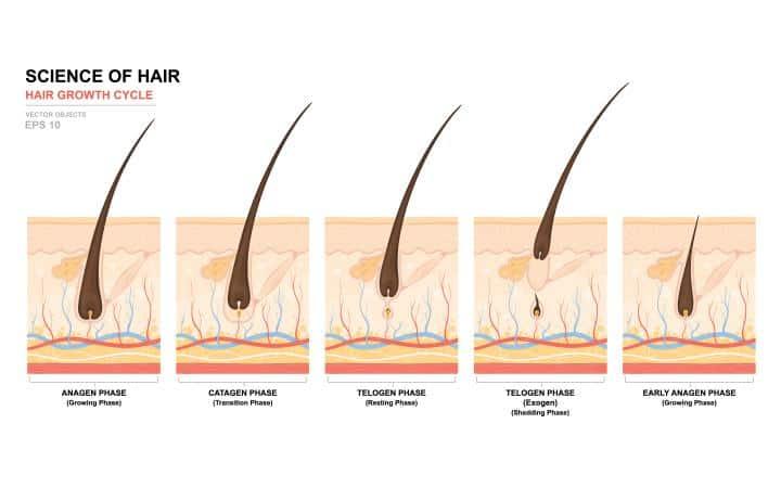 الهرمونات وتساقط الشعر: ما هي هرمونات تساقط الشعر