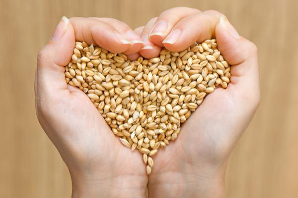 فوائد القمح لعدوى البول