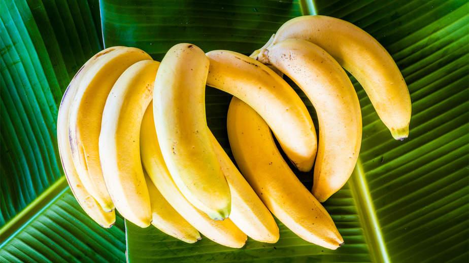 أطعمة أو أغذية الطاقة والنشاط والحركة - أونيلا