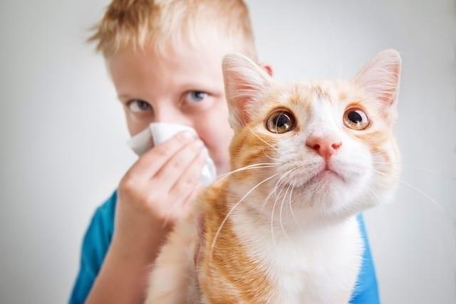 علاج حكة بعد ملامسة الحيوانات - أونيلا