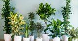 6 نباتات تساعد على تنقية الهواء