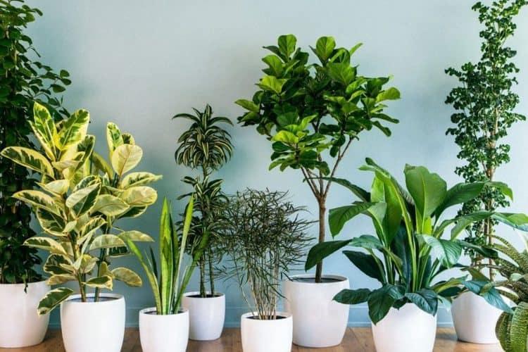 plantas purifcar aire1